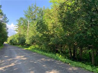 Image of a dirt road lined with green trees.
