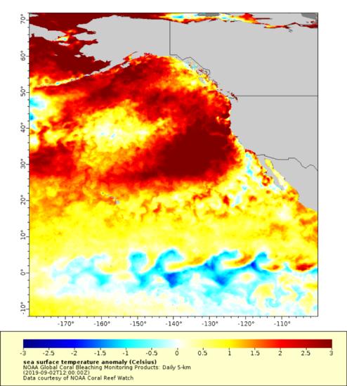The new marine heatwave off the West Coast
