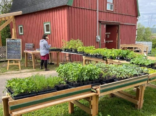 Tessa Kautzman stands in front of display tables with seedlings on them. There is a red barn in the background.