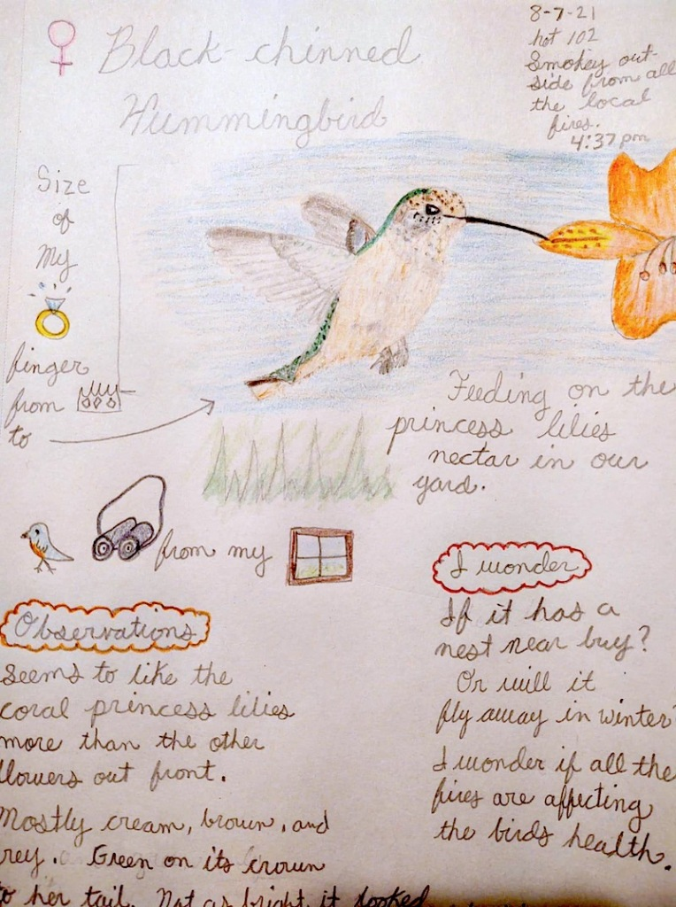 An example of a student's project on hummingbirds with a hand drawn picture and observations.