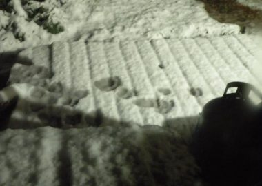 Tracks in the snow are pictured at nightfrom the black bear in Cortes.