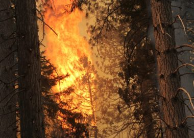 Forest Fire by J Bartlett Team Rubicon/BLM for USFS