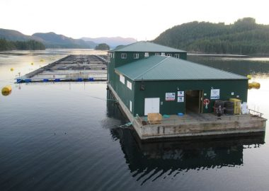 What can an MLA do about fish farms