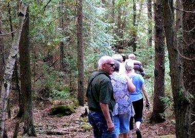 Une excursion en forêts dans le Nord de l'Ontario