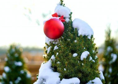 Le haut d'un sapin de Noël enneigé avec une boule rouge