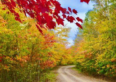 couleurs d'automne au Cap-Breton