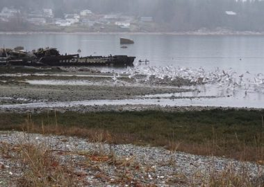 Photo from 2018 bird count - courtesy Cortes Island Museum