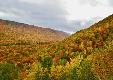 Forêt du Cap-Breton aux couleurs d'automne.