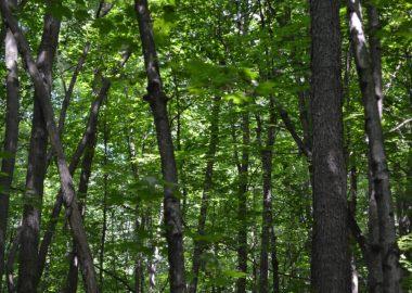 Des arbres dans une forêt.