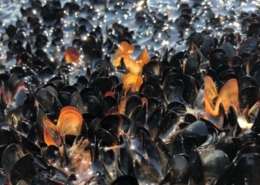 Countless dead mussels are seen at the waterline. They are black and orange in colour.