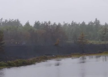 Forest fire scorches 32 hectares along Broad River.