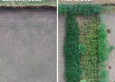 A side-by-side comparison of two aerial shots of the same forest garden over a year.