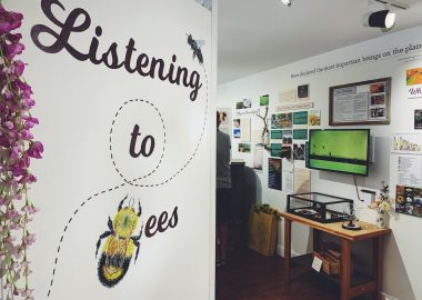 Wall displaying the words Listening to Bees, beyond which are display cases and posters