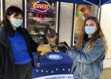 Deux femmes bénévoles tiennent dans leurs main n épervier de Swainson et une tortue-boîte de l'Est.