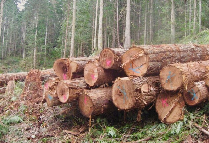A pile of logs cut down in Cortes
