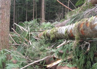 Logs in the Squirrel Cove cutblocks - Roy L Hales photo