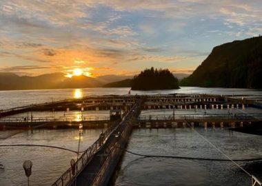 sunrise over a fish farm