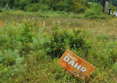 Several election lawn signs displayed in an overgrown field by the side of the highway