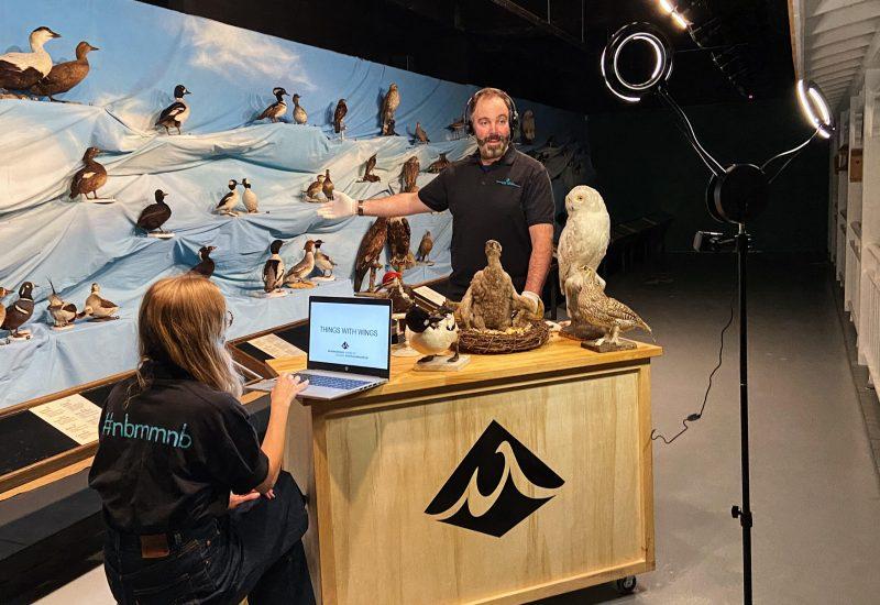 Des employés du musée tournent une vidéo sur les oiseaux