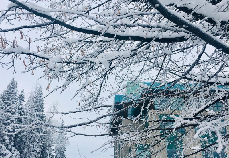 View of a UNBC building through a snowy branch on a grey winter day.