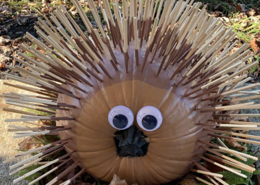 A pumpkin decorated as a porcupine. Wooden sticks protrude from the pumpkin to replicate quills and there is also googly eye on the front of the pumpkin.
