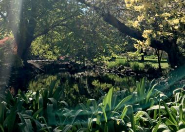 Le parc Beacon Hill abrite des espèces végétales endémiques et sensibles.