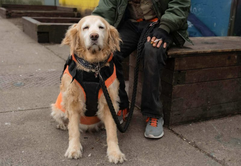 A dog waiting is turn at the Charlie's Food Bank