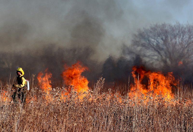 Pompiers dans un feu de forêt.