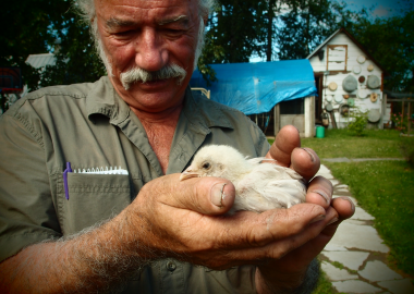Ed Gilliard holds a chick in his hands on their farm in Prince George