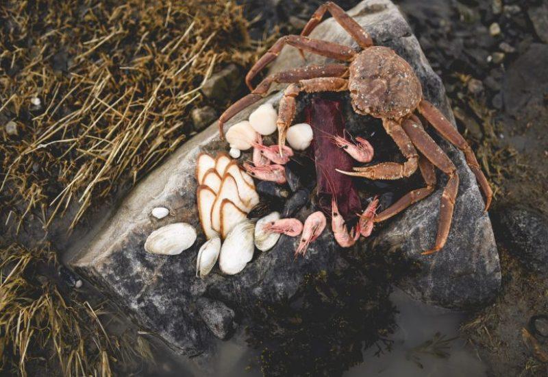 Le collectif Manger le Saint-Laurent veut développer l'appétit des Québécois pour les produits marins locaux. – Photo tirée de la page Facebook Manger le Saint-Laurent