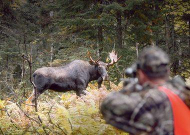 Le MFFP a enregistré une hausse du nombre d'ours abattu, mais une diminution de la chasse aux chevreuils sur Anticosti. - Photo MFFP