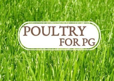 White Poultry for PG logo on green grass background