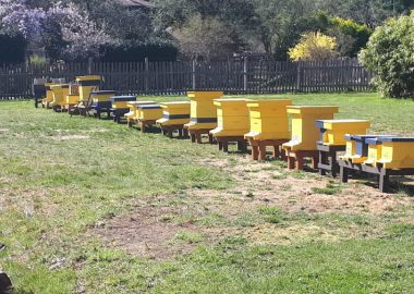 Lessons from the bees