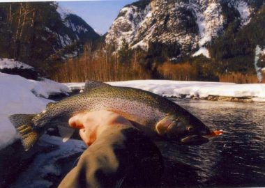 A hand holds a salmon in front of a sunny lake and snowy mountain range.