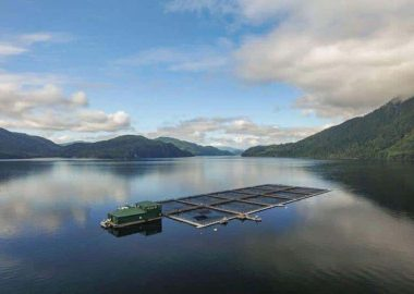 Seeking judicial review for fish farms on unceded territory