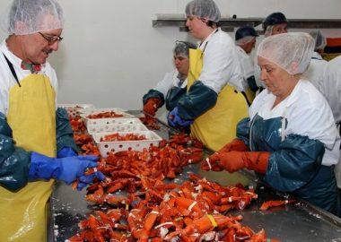 Le secteur de la transformation des pêches devra s'adapter à l'interdiction de jeter les coproduits dès 2025. – Photo archives CJTB